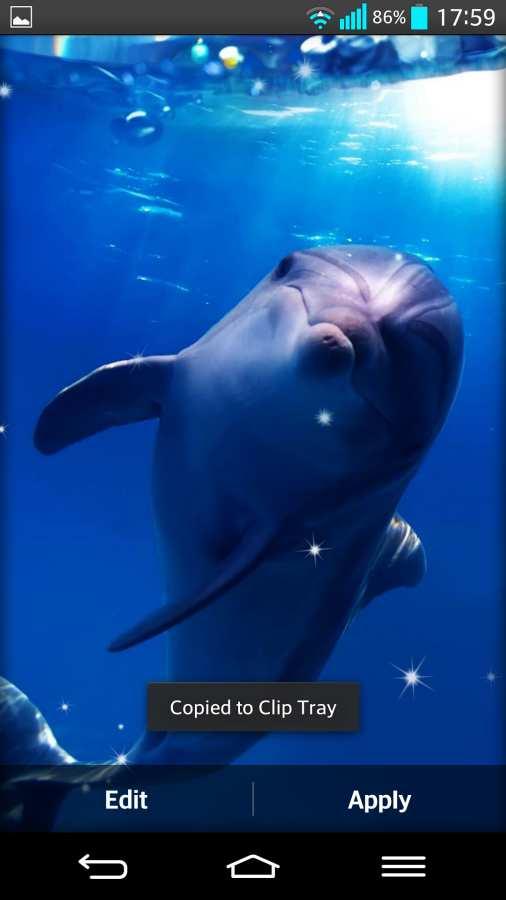 海豚 动态壁纸截图2