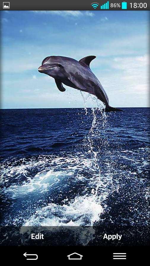 海豚 动态壁纸截图3