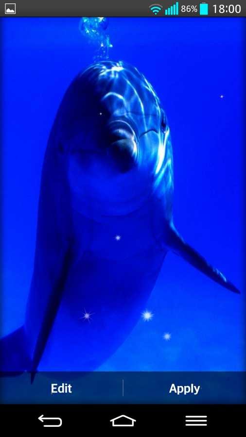 海豚 动态壁纸截图4