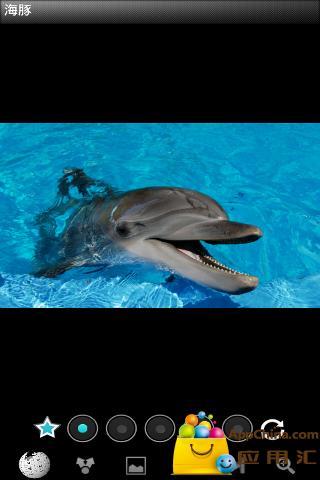 有趣的海豚