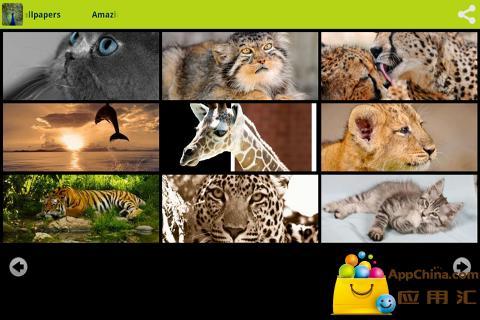 令人惊奇的动物壁纸