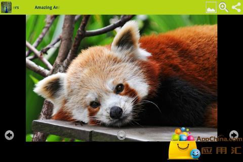玩免費個人化APP|下載令人惊奇的动物壁纸 app不用錢|硬是要APP