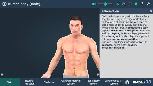Human body (male) VR 3D截图0