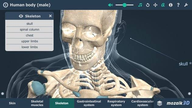 Human body (male) VR 3D截图1