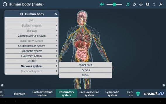 Human body (male) VR 3D截图10