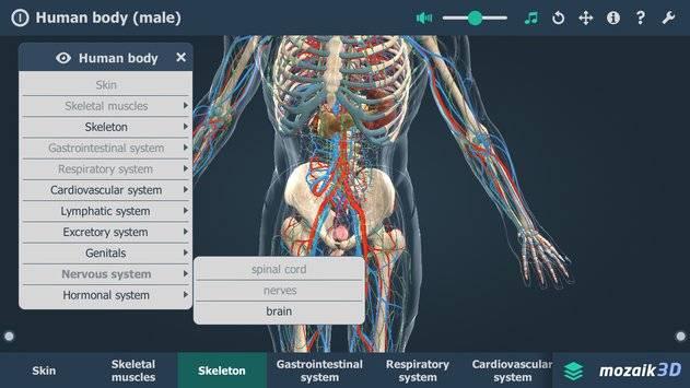 Human body (male) VR 3D截图2