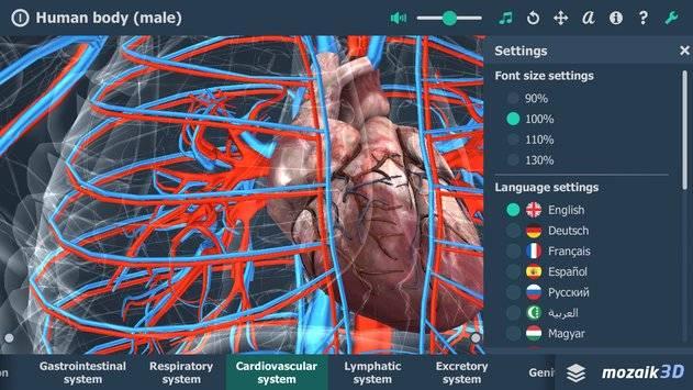 Human body (male) VR 3D截图3