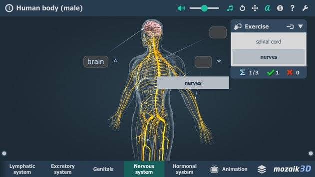 Human body (male) VR 3D截图4