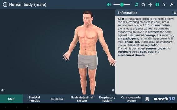 Human body (male) VR 3D截图7