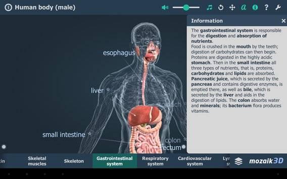 Human body (male) VR 3D截图9