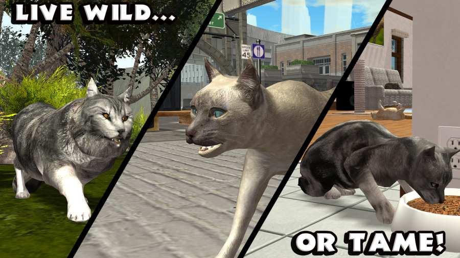 终极猫咪模拟截图3