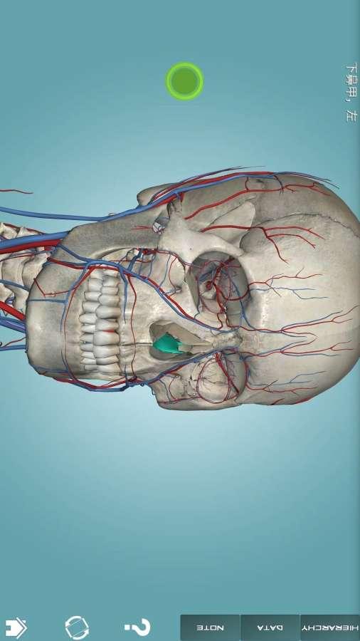 人体解剖学图集截图3