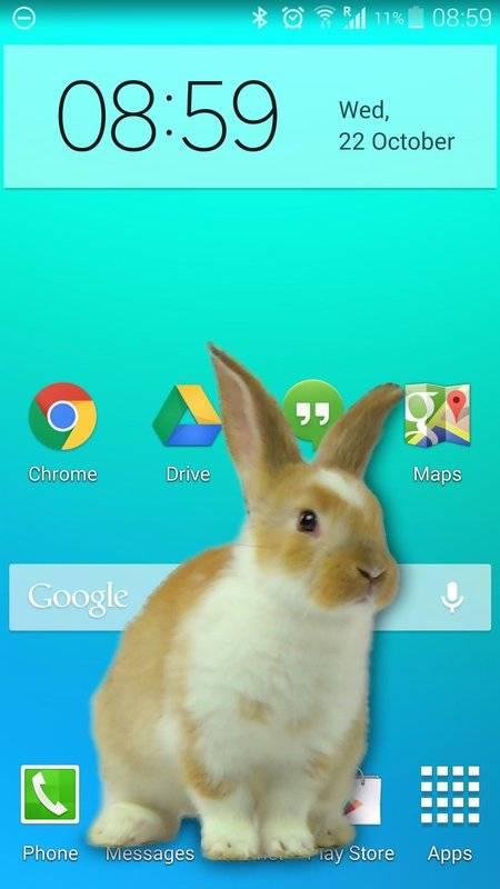 兔子在手机可爱的笑话截图5