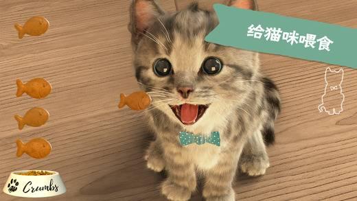 Little Kitten - 我最喜爱的猫猫截图2