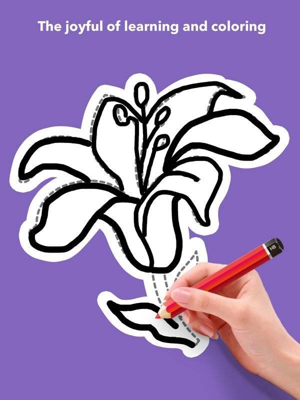 学画花朵截图6