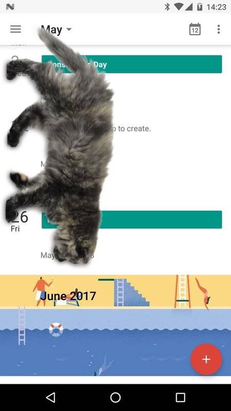 可爱猫动态屏幕