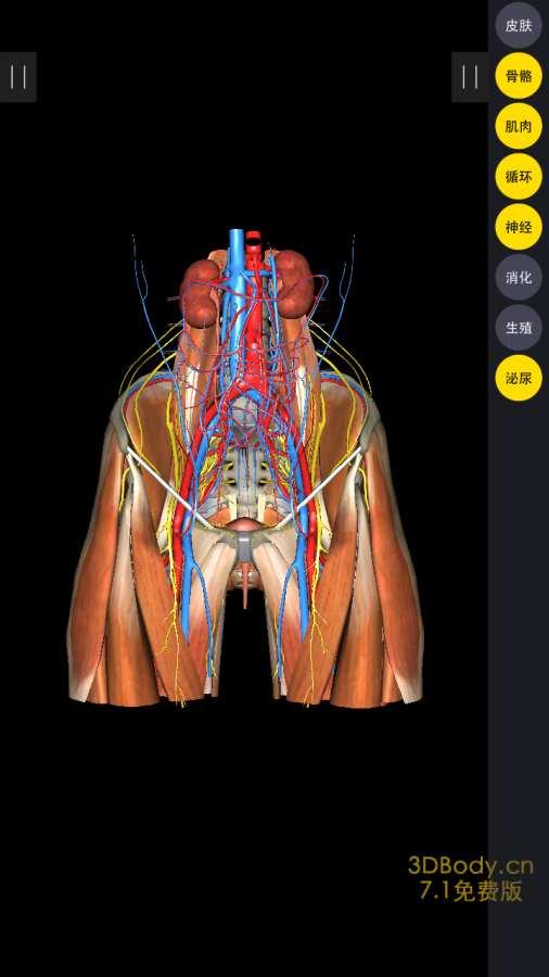 3Dbody解剖截图2
