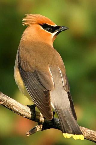 br />标签:鸟声音,3d鸟的声音,动物的声音,铃声,优美的铃声 /p>