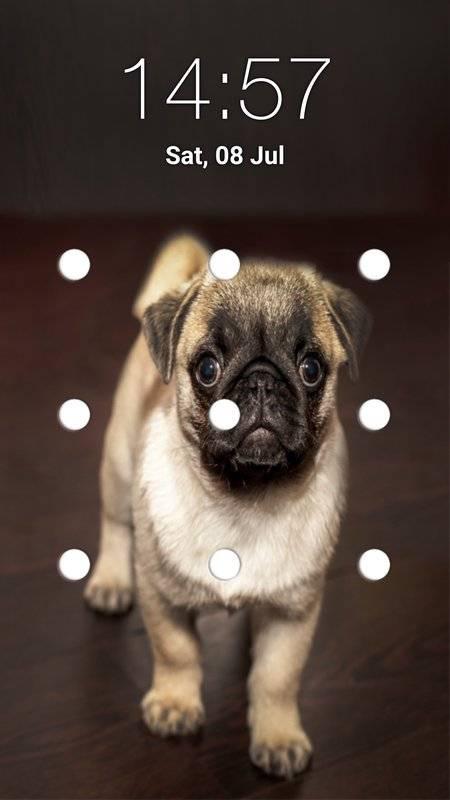 小狗图案锁屏截图3