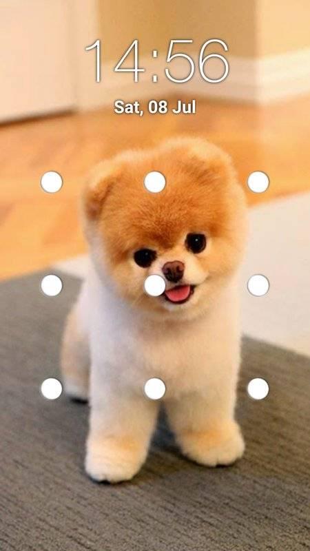 小狗图案锁屏截图4