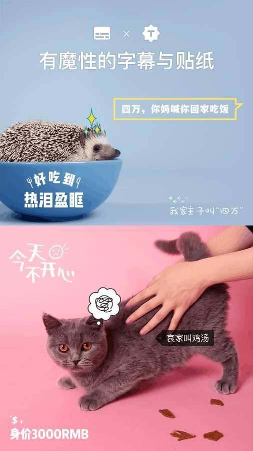猫饼-用视频讲故事截图2
