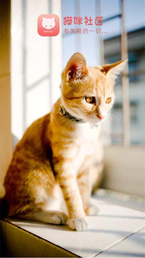 猫咪社区截图0