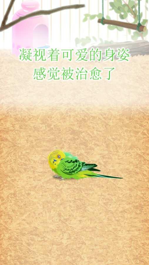 治愈的鹦鹉育成游戏截图2