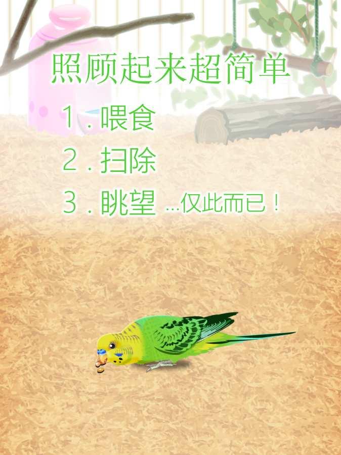治愈的鹦鹉育成游戏截图3