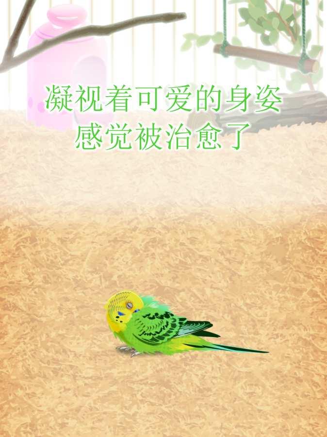治愈的鹦鹉育成游戏截图4