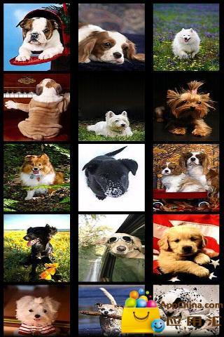 玩免費工具APP 下載可爱小狗壁纸 app不用錢 硬是要APP