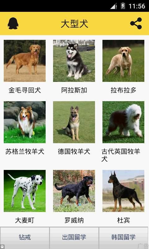 宠物狗狗助手截图1