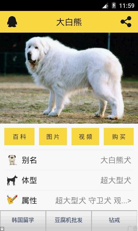 宠物狗狗助手截图2
