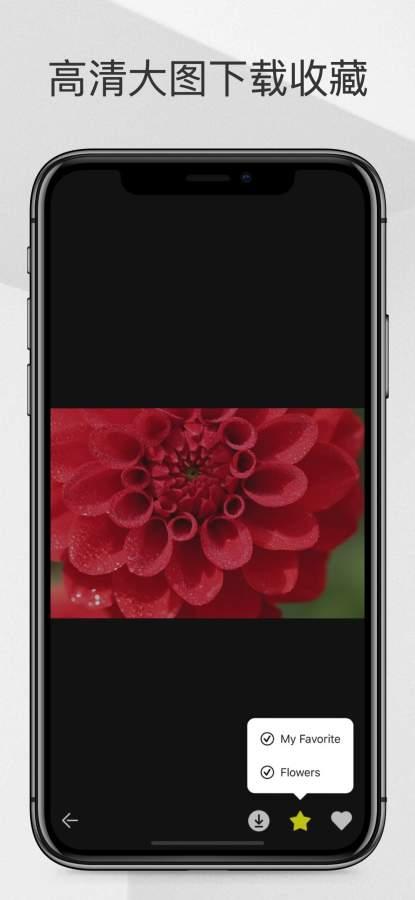 PixHall-高清可商用图片壁纸库截图2