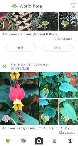 PlantNet 植物识别
