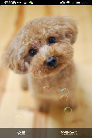 萌萌萌狗动态壁纸收集了数十张非常漂亮可爱的宠物