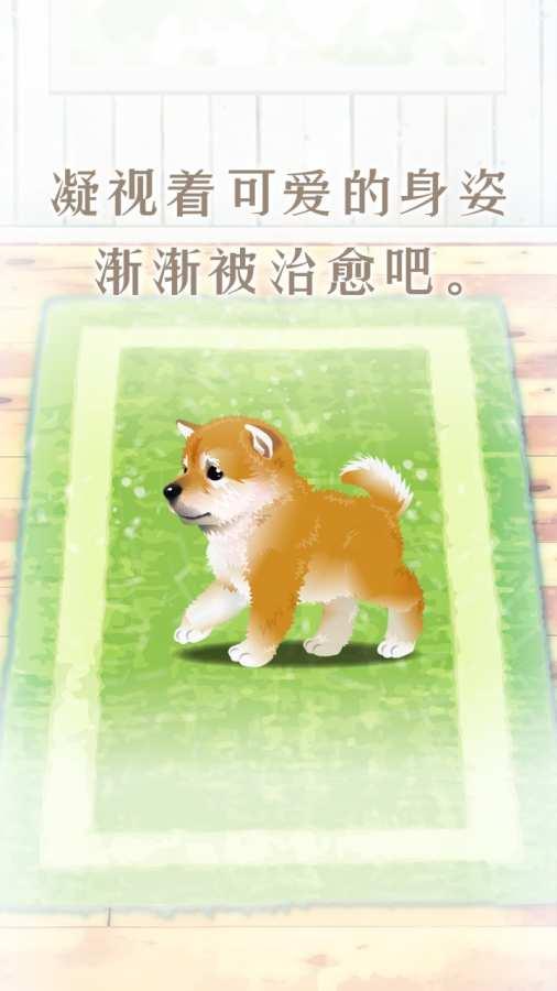 养育柴犬的治愈游戏截图1