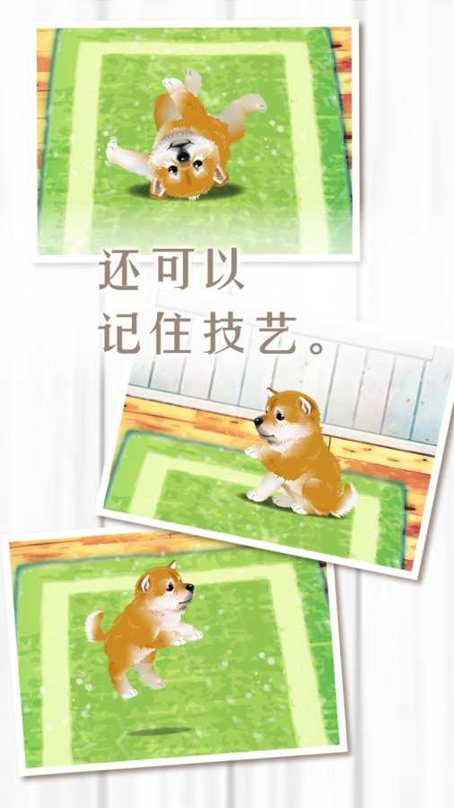 养育柴犬的治愈游戏截图3