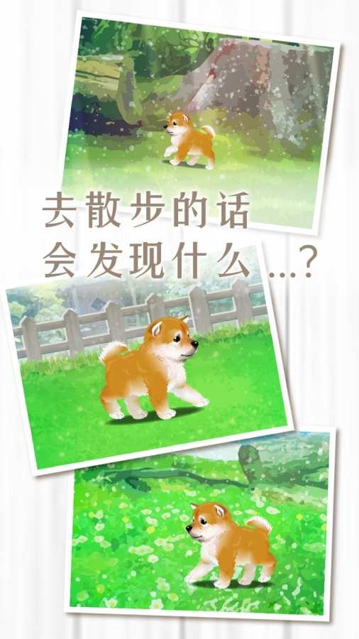 养育柴犬的治愈游戏截图4