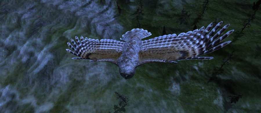 猫头鹰狩猎之旅截图3