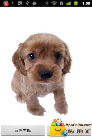 狗狗动态壁纸