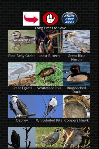 經典鳥呼叫截图1