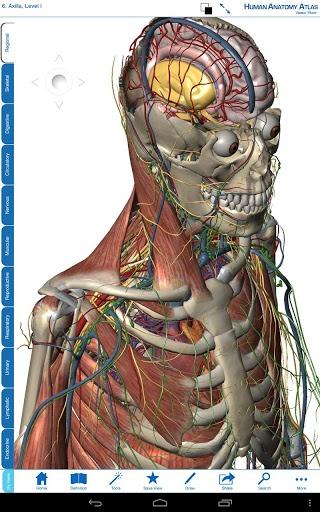 人体解剖学图谱
